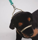 step5-k9-bridle-fitting-instructions.jpg