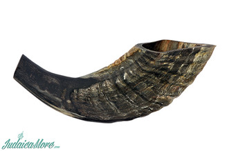 Natural Dark Ram Horn Kosher Shofar