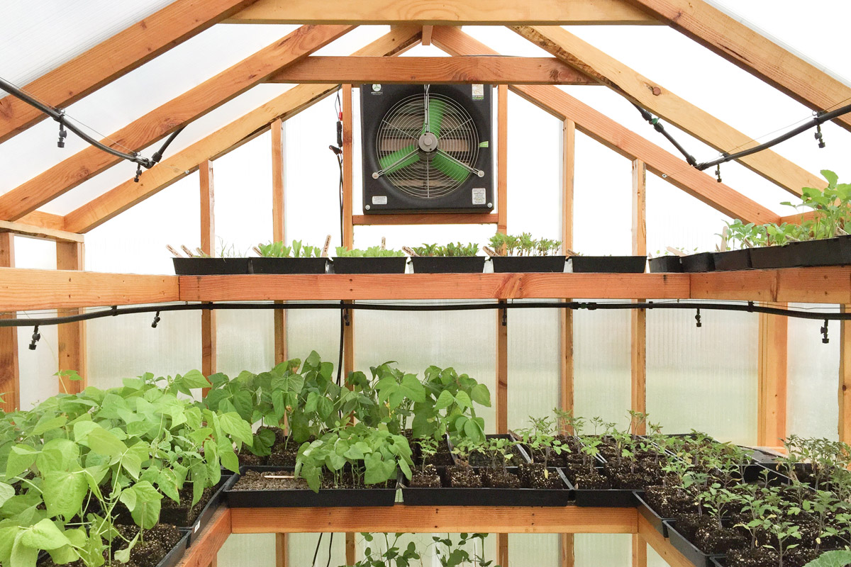 Best Of Both Worlds: All You Need To Know About Greenhouse Grows