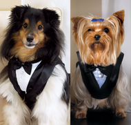 Special Occasion Pet Tux