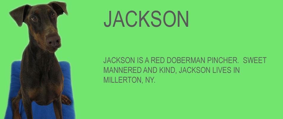 jackson-copy.jpg