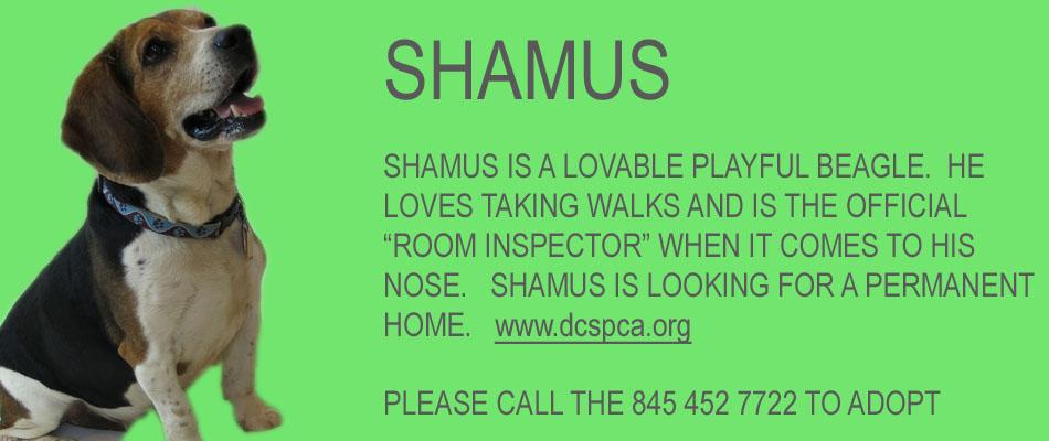 shamus-copy.jpg