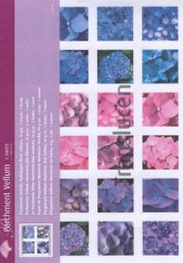 Vellum - hydrangea SQUARES 5 sheets 8.5x11