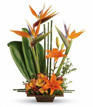 Tropical Grace Funeral Arrangement