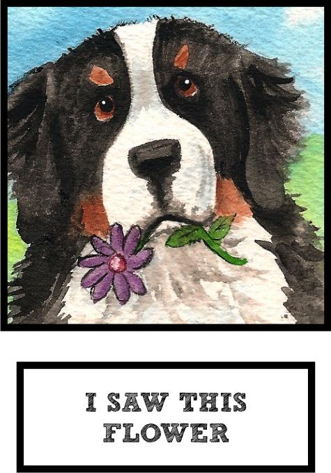 i-saw-this-flower-bernese-mountain-dog-thumb.jpg
