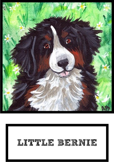 little-bernie-bernese-mountain-dog-thumb.jpg
