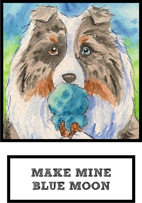 make-mine-blue-moon-blue-merle-sheltie-thumb.jpg