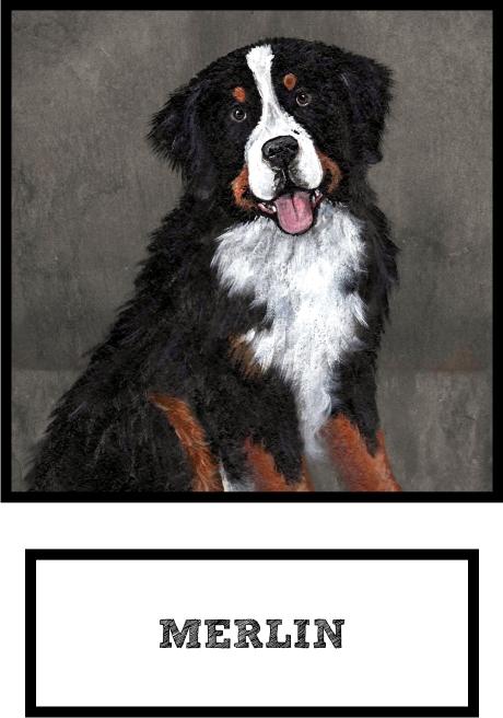 merlin-bernese-mountain-dog-thumb.jpg