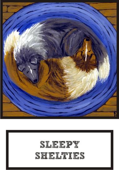 sleepy-shelties-bi-blue-sable-sheltie-thumb.jpg