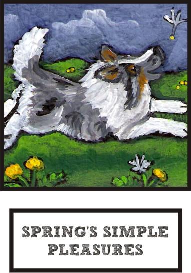 spring-s-simple-pleasures-blue-merle-sheltie-thumb.jpg