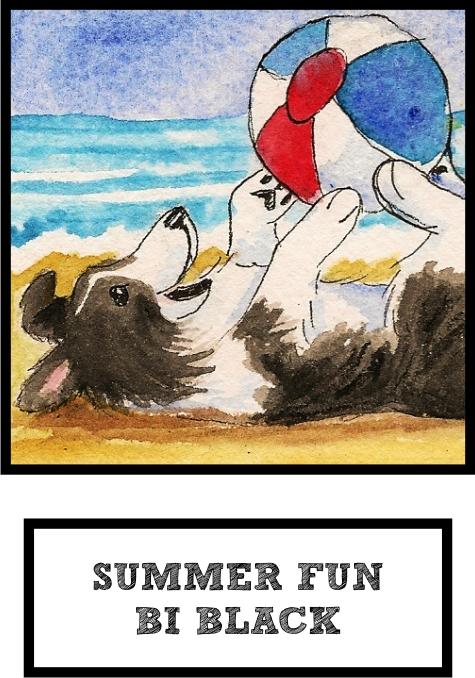 summer-fun-bi-black-sheltie-thumb.jpg