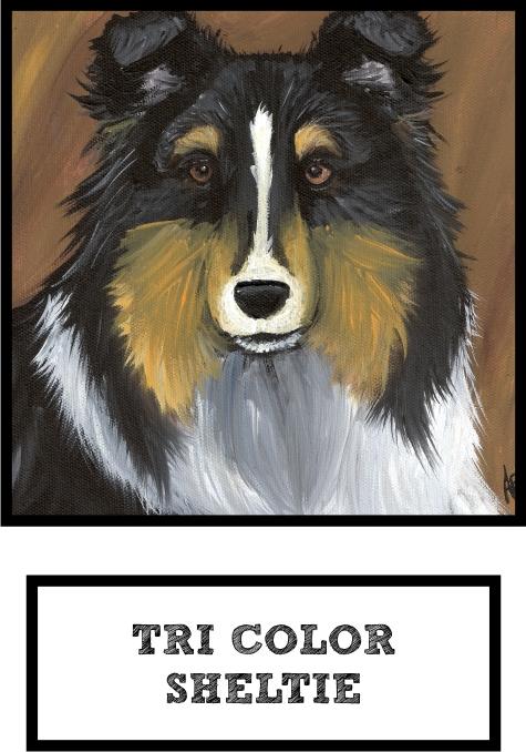 tri-color-sheltie-thumb.jpg