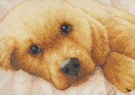 Gold Collection Petites - Golden Puppy