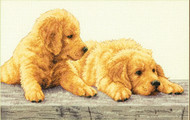 Dimensions - Golden Retriever Puppies
