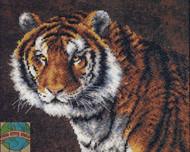 Dimensions - Tiger