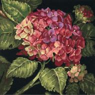 Dimensions -  Hydrangea Bloom