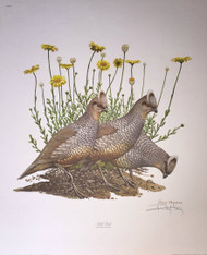 "New Ray Harm Signed Print ""Scaled Quail"" Original Envelope Folder Insert 64.1"