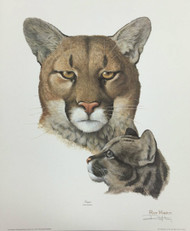 "New Ray Harm Signed Print ""Cougar"" Original Envelope Folder Insert 62.1"