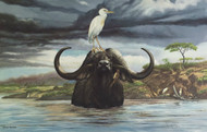 "New Ray Harm Signed Print ""Cape Buffalo"" Envelope Folder Insert LTD Ed 960/1000"