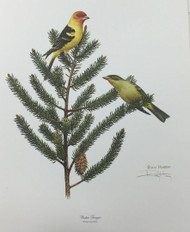 "New Ray Harm Signed Print ""Western Tanager"" Original Envelope Folder Insert 63.2"