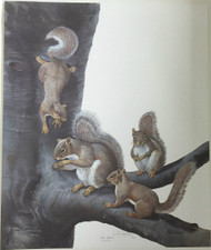 "New Ray Harm Hand Signed Limited Edition Print ""Gray Squirrel"" Original Envelope"