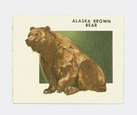 1951 Animals of the World 102 Alaska Brown Bear Excellent Grey Back