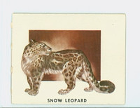 1951 Animals of the World 169 Snow Leopard Excellent Grey Back