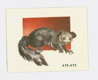 1951 Animals of the World 191 Aye-Aye Excellent to Mint Grey Back