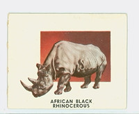 1951 Animals of the World 196 African Black Rhinocerous Excellent Grey Back