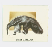 1951 Animals of the World 197 Giant Anteater Excellent Grey Back