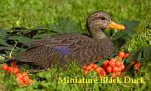 Black Duck, miniature, pattern
