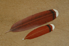 Redtail Hawk Feather Pin