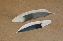 Mourning Dove Feather Pin