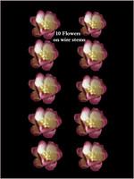 42260  Blossoms 2tone Shiraz
