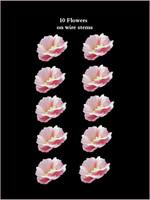 43320  Fruit Blossom Mid Pink