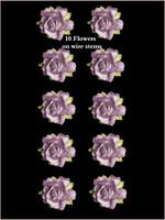 45240 Rose Lilac