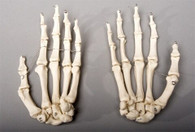 Skeleton Hands, life-size, pair, 2nd class, AGED version