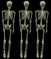 3 PIECE 5 FOOT  ARTICULATING SKELETON DEAL