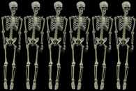 6 PIECE ARTICULATING SKELETON DEAL