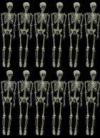 12 PIECE ARTICULATING SKELETON DEAL