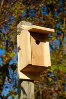 Eastern Bluebird Joy Box in Solid Cypress.