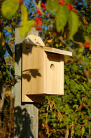 Chickadee Joy Box in Solid Cypress.