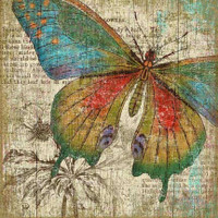 Vintage Butterfly Right Sign