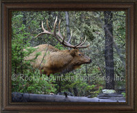 First Look Framed Elk Wildlife Print - Mitchell Mansanarez