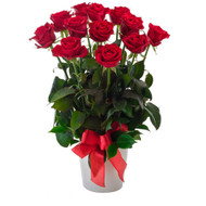 Impulse - Red Roses in a Ceramic Pot