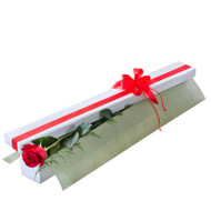 First Kiss - Single Long Stemmed Red Rose