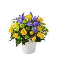 Yellow Roses in ceramic pot