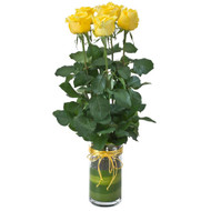 Adore Yellow