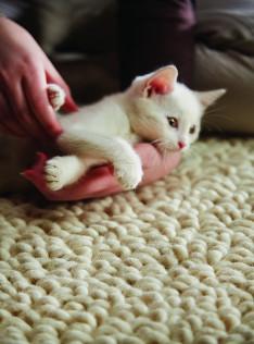 union-ivory-kitten.jpg