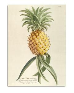 Ananas. Plantae Print
